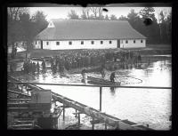 Salmon hatchery, Raymond, 1926