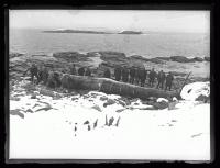 Beached whale on Ragged Island, 1927