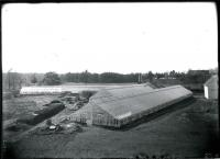 Strout Greenhouses, Biddeford, 1909