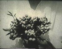 Blueberry Harvesting Film