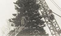 Preparing National Christmas tree, Presque Isle, 1959