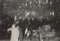 Cutting tree, Presque Isle, October, 1959