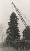 Crane on Christmas tree, Presque Isle, 1959