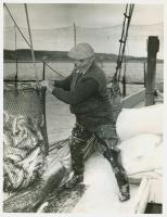 Herring being retrieved from weir, Lubec, 1941