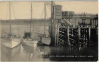 Sardine boats, Lubec, ca. 1950