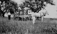 Orchard Spraying, Berwick, 1917