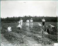 Girls picking strawberries, Biddeford, 1925