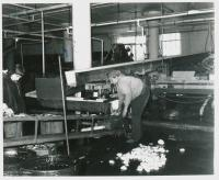 USA Fish plant interior, Lubec, ca. 1960