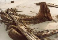 """Howard H. Middleton"" shipwreck, Scarborough, ca. 1970"