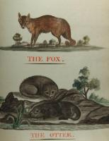 The Fox The Otter watercolors, Blue Hill, 1814