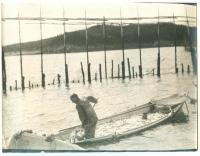 Herring weir, Lubec, ca. 1935