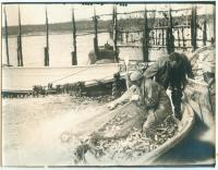 Herring weir brush leader, Lubec, ca. 1935