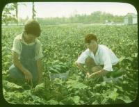 Orphans gardening, Hinckley, ca. 1920