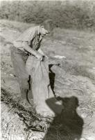 Boy Bagging Potatoes, Fairfield, ca. 1935