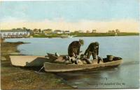 Dressing Fish, Biddeford Pool, ca. 1910