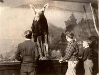 L.C.Bates Museum, Fairfield, ca. 1945