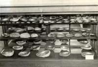 Abalone Shells, Fairfield, ca. 1950