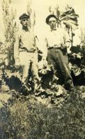 Harvesting Rhubarb, Cousins Island, ca 1920