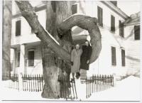 Doughnut tree, Fryeburg, 1943