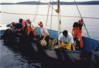 Purse seining off Swan's Island, 1999