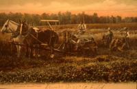 Aroostook Wheat Field