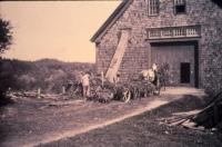 Cutting Silage, New Gloucester, ca. 1904