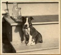 Dog 'Peter,' Falmouth, ca. 1920