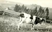 Richard Griffeth farm, Limestone, ca. 1914