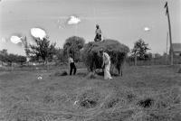 Haymaking, Denmark, ca. 1910