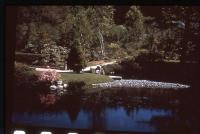 Asticou Azalea Garden, Northeast Harbor, ca. 1958