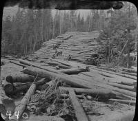 Logging in Maine Woods
