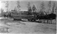 Hauling logs to a landing, Maine woods