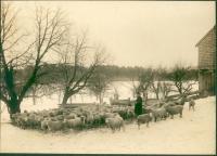 McIntire Farm, Waterford, ca. 1910