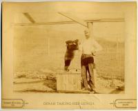 Dinah, Carrabassett, ca. 1905