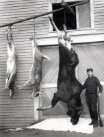 Hunter with moose and two deer, ca. 1900