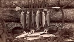 Fishing catch from Ragged Lake, ca. 1887