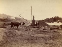 Team of oxen at Pejepscot Paper Co. dam site, Topsham, 1893