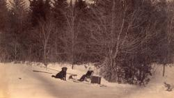 Alice Mae White and Toby, Houlton, 1890