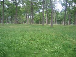 Unclipped Grasses of Deering Oaks, 2004