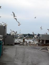 Bait Breakfast on Union Wharf, 2004