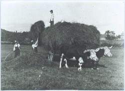 Haying, Baldwin, ca. 1890