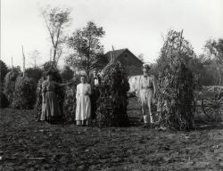 Drying Beans on the Farm, Sanford, ca. 1900