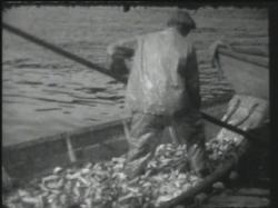 Herring fishing, Mt. Desert, ca. 1940
