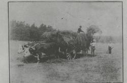 Haying c. 1910