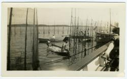 Herring being transported, Lubec, ca. 1930