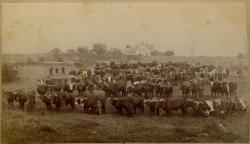 Blue Hill Agricultural Fair, ca. 1875