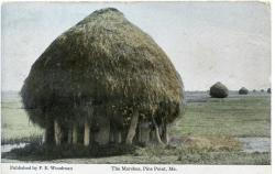 Marsh Staddle, Scarborough, ca. 1900