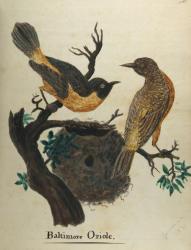 Baltimore Orioles, Blue Hill, 1814