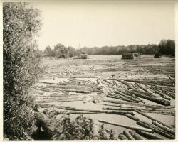 Log Drive, Saco River, ca. 1894