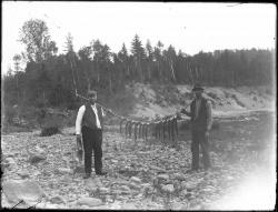 A few trout from Valley Brook, Strong, ca. 1905